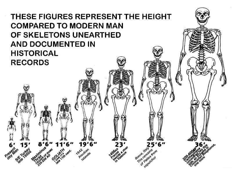 Giants Height Chart