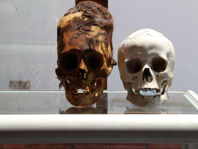Paracus Skull vs. Norman Human Skull